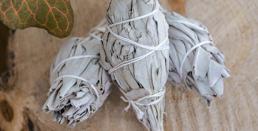 Defumador de Salvia Branca | Tocha