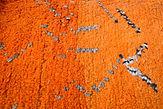Commande_Tapis_orange_Détail_original_1.