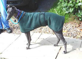 kennel_coat_green.jpg
