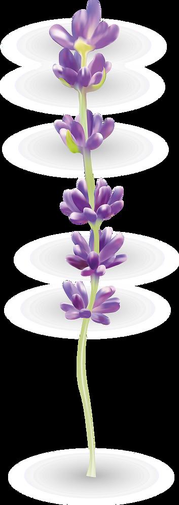 lavender1_edited.png
