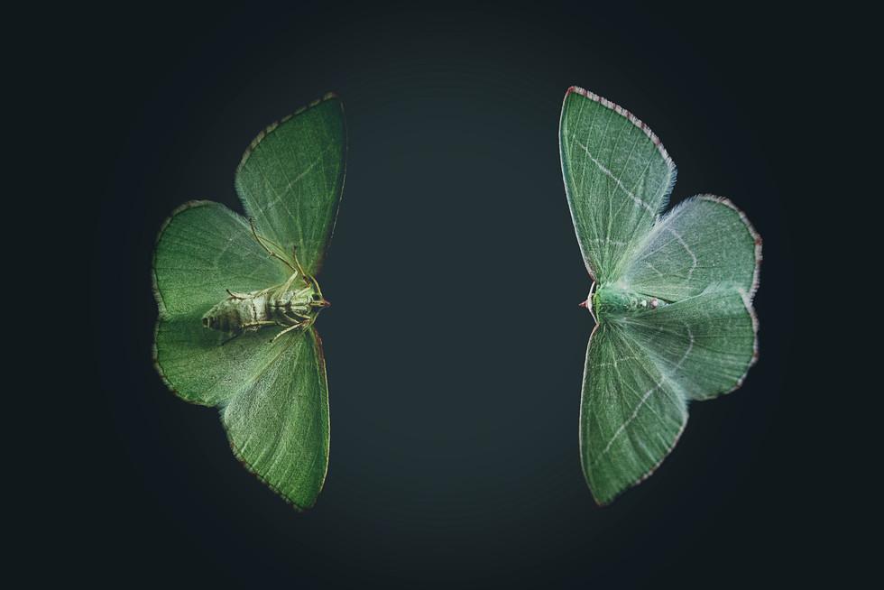 July 2017 Green Moth.jpg