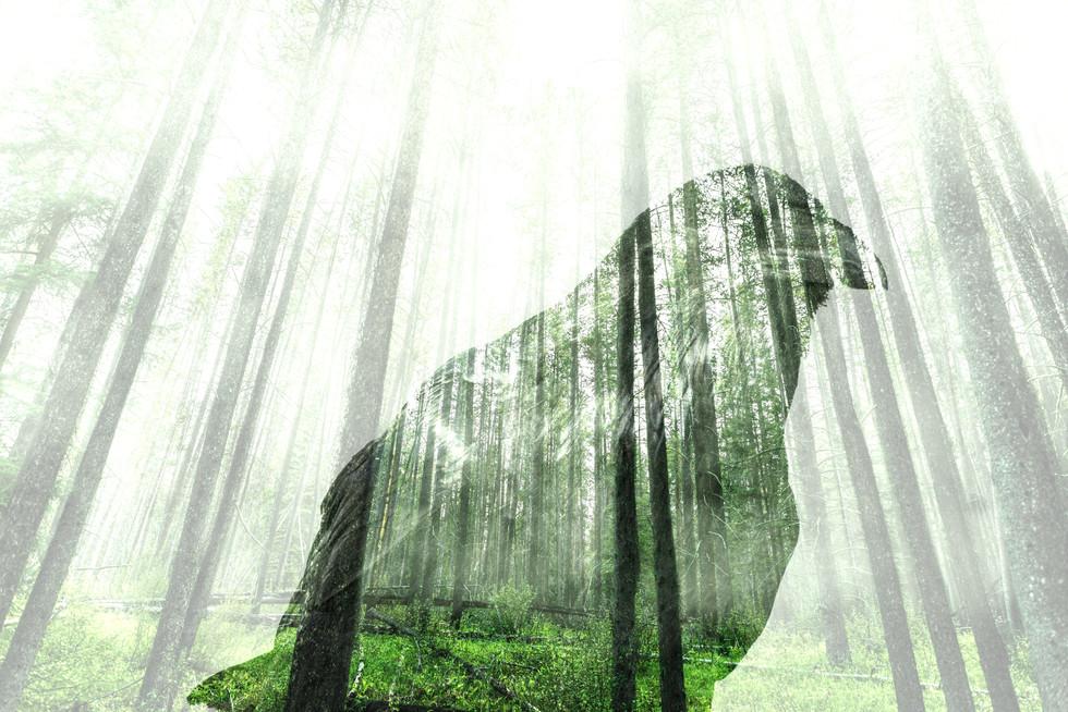 Forest Memory.jpg
