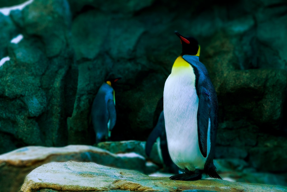 Zoo October 2017 Grand Peguin.jpg