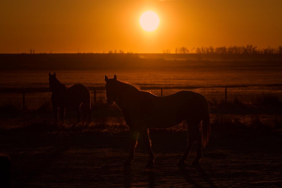 Horses in Sunrise.jpg