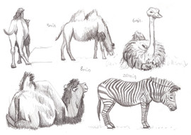 Blackpool Zoo Camels 2016.jpg