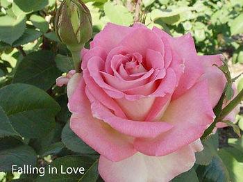 Falling in Love copy.jpg
