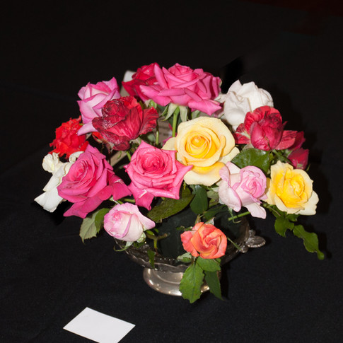 Autumn Rose Show May 2017 Guildford Town Hall