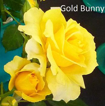 Gold Bunny.jpg