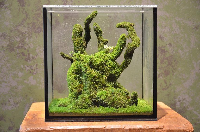 ボトルプラント プレミアムモス コケシダリウム Premium Moss Handmade by Kazuto Hiromiya