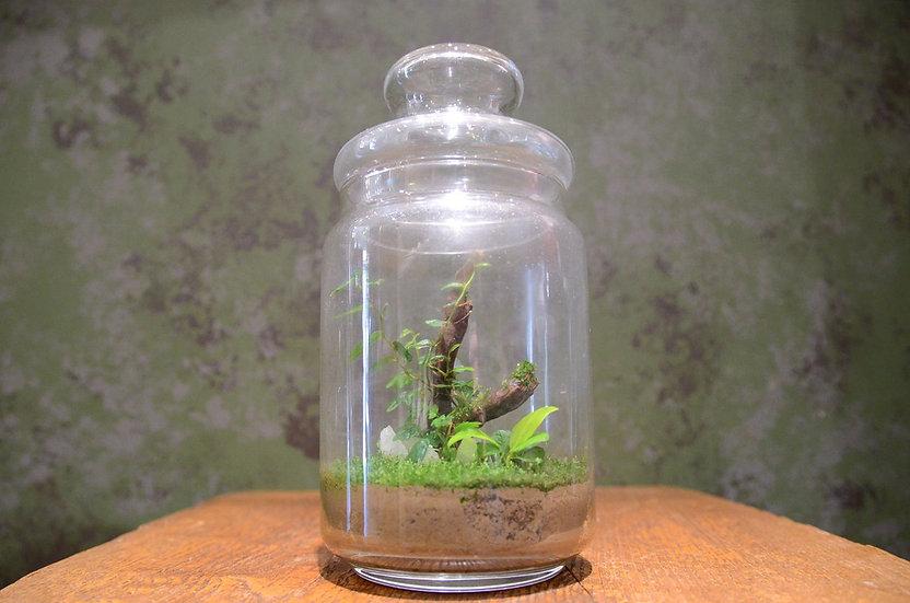 コケシダリウム ボトルプラント 植物 インテリア ワークスペース ハンドメイド