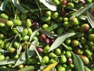 375ml Sevillano Extra Olive Oil