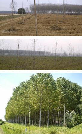 studio pegaso servizi agroambientali, impianti arborei, arboricoltura da legno, produzione legno, legna da ardere, biomassa per energia