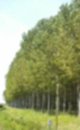 studio pegaso servizi agroambientali, certificazione forestale , catena di custodia certificazione, utilizzatori forestali piemonte, friuli venezia giulia