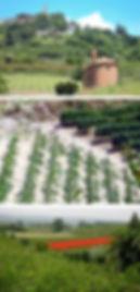 studio pegaso servizi agroambientali, dati ambientali, standardizzazione info ambientali, elaborazione deti ambientali, informazioni ambientali