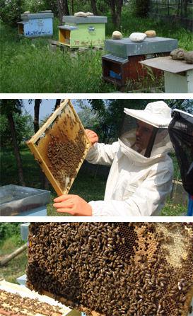 studio pegaso servizi agroambientali, didattica ambientale con le api, barambano parco agrofluviale dora