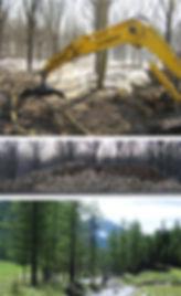 studio pegaso servizi agroambientali, gestione forestale, selvicoltura, piano di assestamento forestale, tagli boschivi, comunicazioni semplici, martellata forestale, regolamento forestale