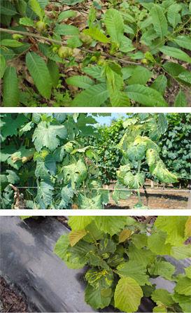 studio pegaso servizi agroambientali, riconoscimento piante, ornamentali, forestali