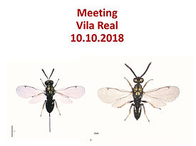 Meeting Vila Real_10-10-18. Torymus sinensis