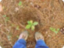 studio Pegaso,torymus, torymus sinensis, cinipide del castagno, lotta biologica