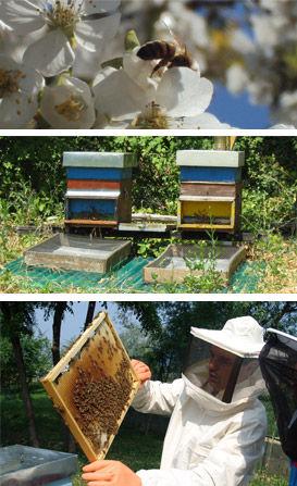 studio pegaso servizi agroambientali, apicoltura, consulenza tecnica api, consulenza apistica