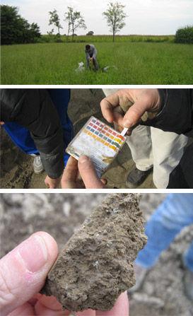 studio pegaso servizi agroambientali. valutazione chimico-fisiche terreni agrari, consigli di concimazione