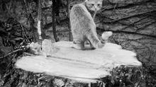 Il gatto se lo sentiva. Stabilità degli alberi
