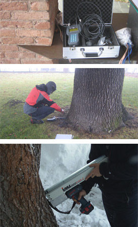 stabilità degli alberi, studio pegaso servizi agroambientali, V.T.A.