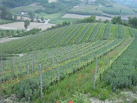 studio pegaso servizi agroambientali, certificazioni, FSC, PEFC, COC