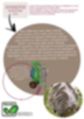 studio pegaso servizi agroambientali torino italia processionaria pino endoterapia trattamenti bacillus thuringensis cane