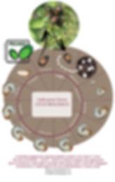 Pegaso Servizi Agroambientali; Italia; Torino; Piemonte; ciclo Popillia; japanese beetle; Popillia japonica; monitoraggio Popillia,