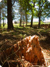 Da impianto di conifere a nuova vita!