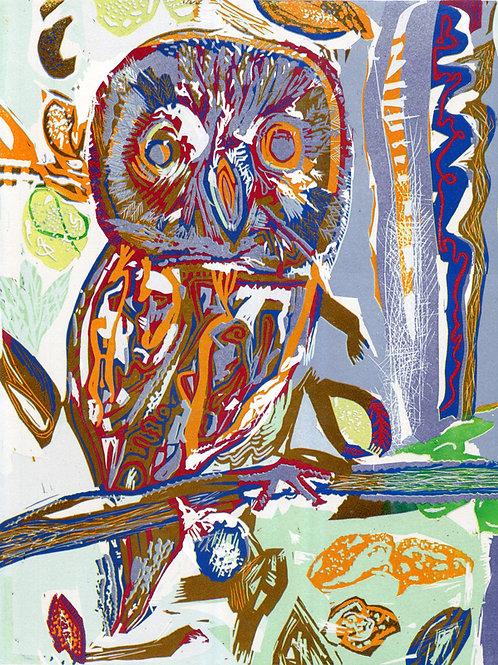 Steve Edwards - Autumnal Owl