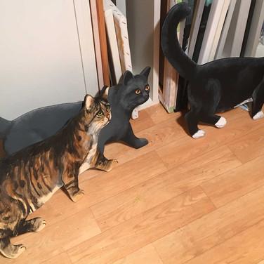 Diverse Katzen