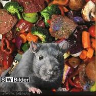 Fotoleinwand mit gemalter Ratte