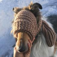 Vertraut Ihnen Ihr Hund blind?
