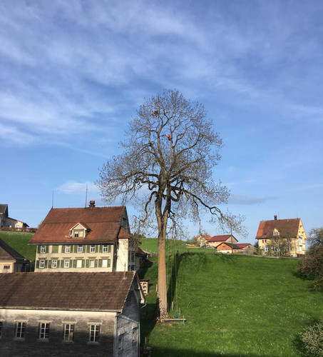 Baumpflege-1_web.jpg