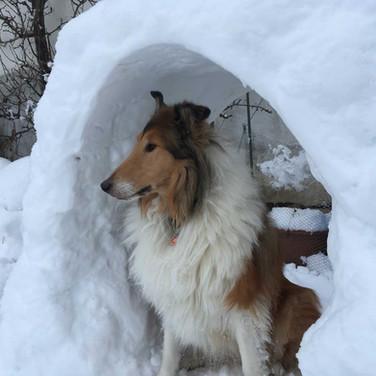 Schneeiglu bei Tage
