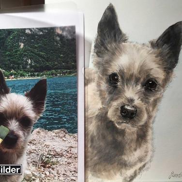 Terrier mit Fotovorlage