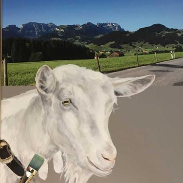 Fotoleinwand mit gemalter Appenzeller Ziege