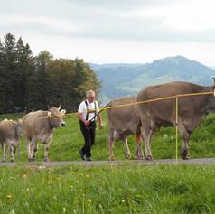 Alp-Nasen-5.jpg