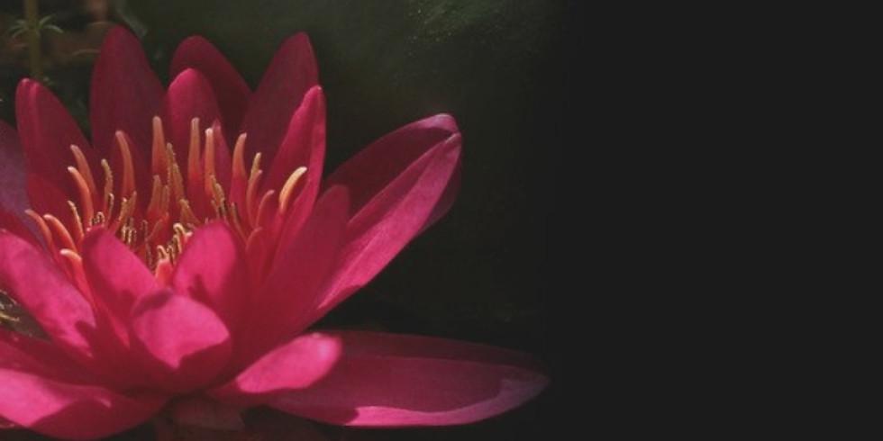 Sanctuary Meditation Workshop