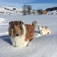 Wir lieben den Schnee