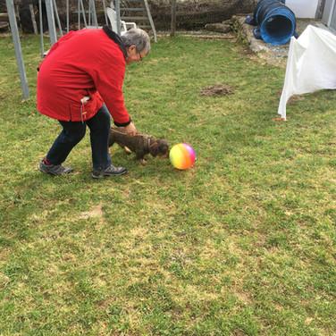 Kleiner Hund mit kleinem Ball