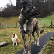 Unsichere Hunde sinnvoll begleiten