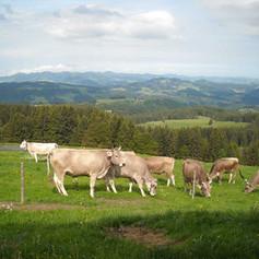 Alp-Nasen-4.jpg