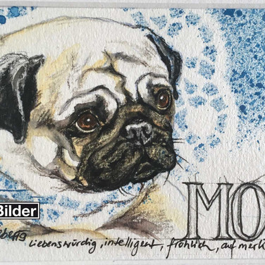 Mops / Collage