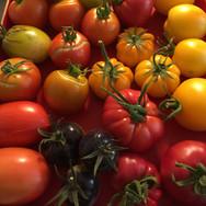 SW Biohof Tomatenfarben