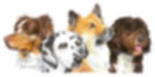 Hunde-Logo-grosse-Datei.jpg