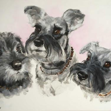 3 Terrier