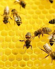 Bees at Work_edited.png